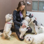 Four dogs with their caretaker