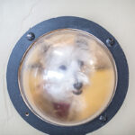 Dog looking out portal