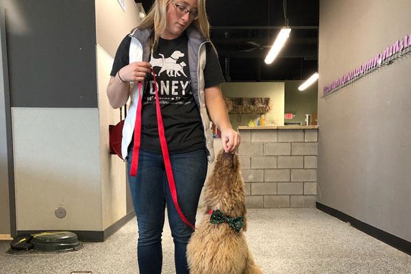 Trainer training a dog